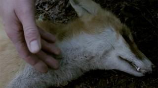 Der Fuchs (2014)