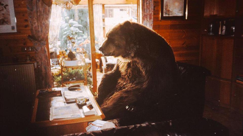 Bär (2014)
