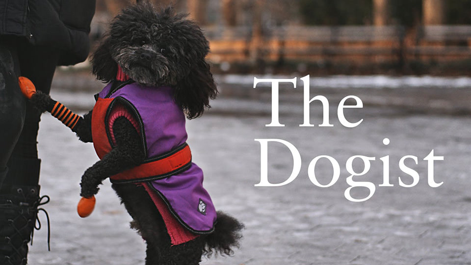 The Dogist (2016)